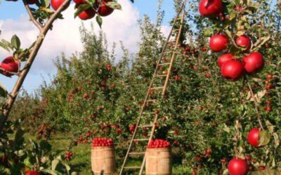 Tendencias e interés empresarial en el sector agroalimentario